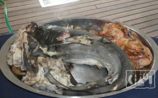 Копченая акула: рецепт приготовления