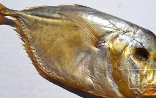 Луна рыба копченая: рецепт приготовления