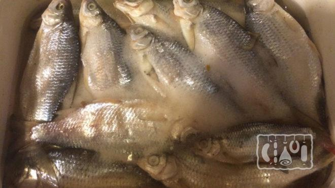 Мокрый посол рыбы