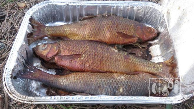Одноразовая коптильня для рыбы