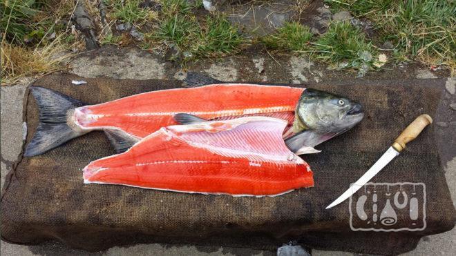 Отделения филейной части у рыбы