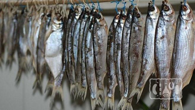 Подсушивание рыбы на веревке