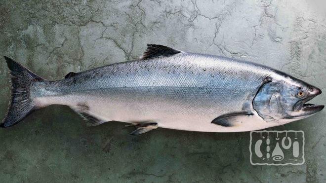 Рыба чавыча