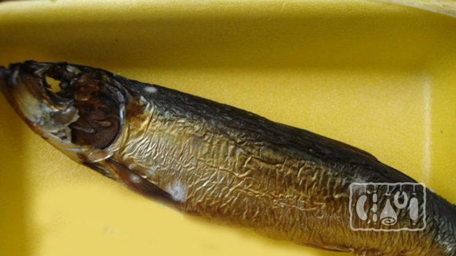 Рыба покрыта плесенью