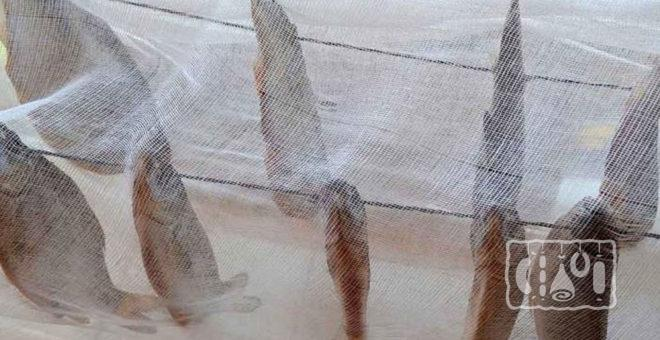 Сушка рыбы под марлей