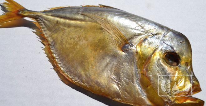 Копченая рыба луна