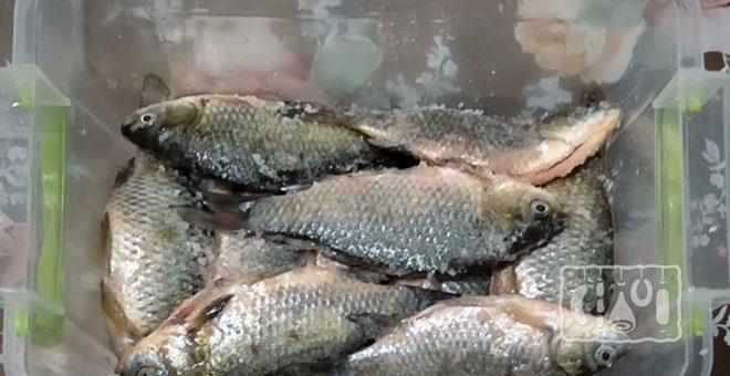 Засолка рыбы в пищевом контейнере