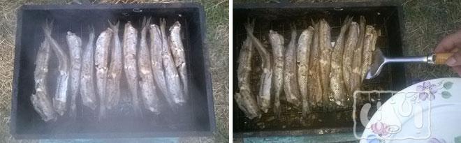 Фото копчения рыбы путассу